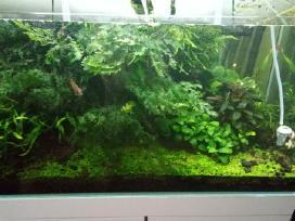Augalai akvariumui