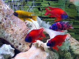 Įvairios žuvytės, pigiau