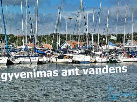 Laivų nuoma, pardavimai, jachtų regata