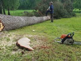 Avarinių medžių, šakų pjovimas, rąstų pjaustymas