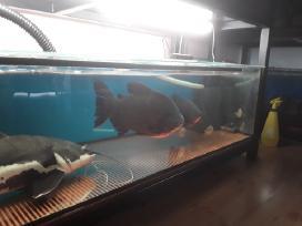 Akvariuminės žuvytės, šaldytas ir sausas maistas.