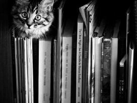 Perku knygas