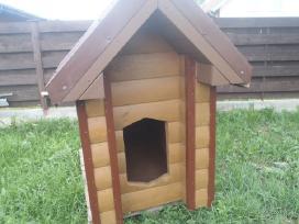 Suns budos,nameliai kaciukams - nuotraukos Nr. 14