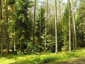 Miškas Jieznas