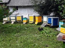 Parduodu bites
