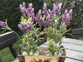 Vazonai gėlėms - nuotraukos Nr. 5