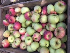Obuoliai. - nuotraukos Nr. 2