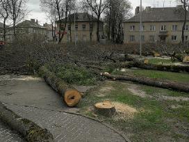 Medžių pjovimas,genejimas,kelmų rovimas, išvežimas - nuotraukos Nr. 9