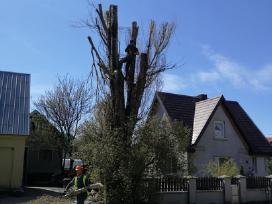 Medžių pjovimas,genejimas,kelmų rovimas, išvežimas