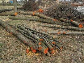 Medžių pjovimas,genejimas,kelmų rovimas, išvežimas - nuotraukos Nr. 10