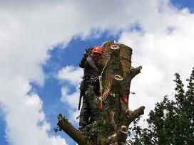 Pavojingų medžių pjovimas, genėjimas