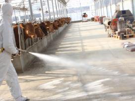 Ūkinių pastatų, fermų kalkinimas ir dezinfekcija