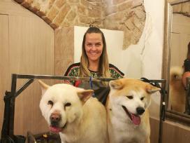 Mažų ir didelių šunų veislių kirpimas