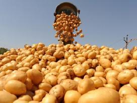 Perku bulves