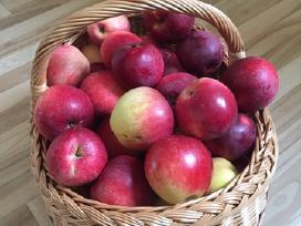 Naminiai obuoliai