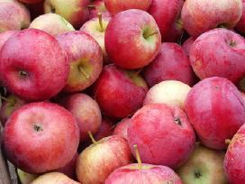 """Parduodu obuolius """"auksis"""""""