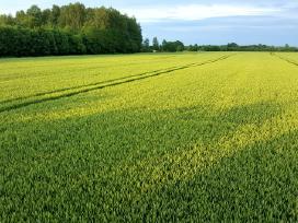 Perku/nuomojuosi žemės ūkio paskirties žemę.