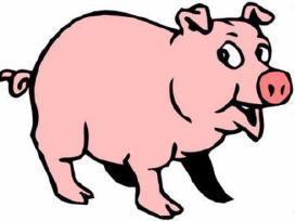 Perku paršavedės kiaulės skerdimui