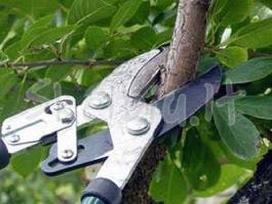 Profesionalus medžių genėjimas