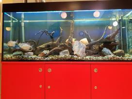Akvariumu įrengimas,valymas,priežiura,konsultacijo