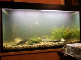 Akvariumu įrengimas,valymas,priežiura,konsultacijo - nuotraukos Nr. 3