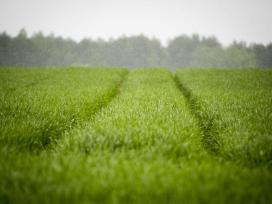Išsinuomočiau/įsigyčia žemės ūkio paskirties žemę.