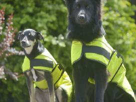 Kokybiški apsiaustai šunims, nuo Xxs iki Xxl - nuotraukos Nr. 5