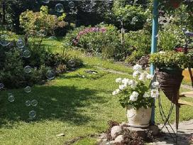 Muilo burbulu aparato nuoma jūsu šventei 15 eu. - nuotraukos Nr. 4