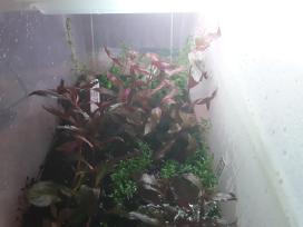 Akvariumų Priežiurą