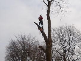 Pjauname medžius - genime šakas
