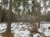 Brangiai Perku Miska Visoje Lietuvoje - nuotraukos Nr. 4