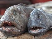 Organizuoju žvejybines keliones i Norvegiją - nuotraukos Nr. 3