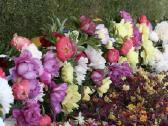 Gėlių sodinukai, gausus pasirinkimas - nuotraukos Nr. 3