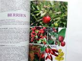 Ultimate Edible Plant Guide - nuotraukos Nr. 4
