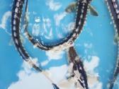 Eršketas- Žvaigždėtasis - Stelatusas - nuotraukos Nr. 2