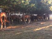 Perku arklius